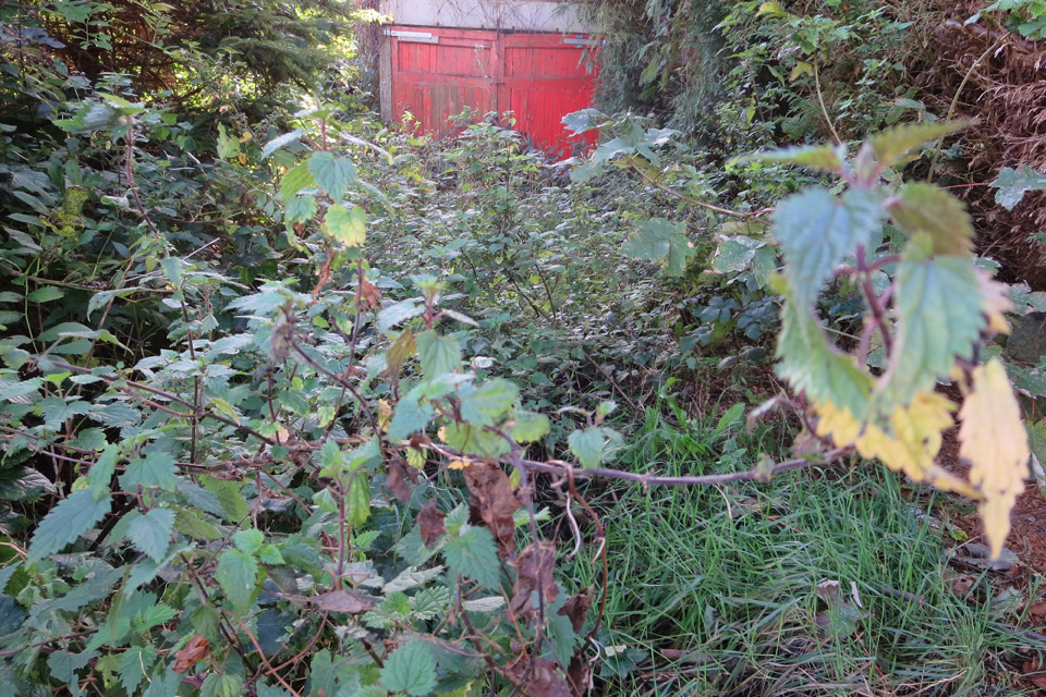 A garage at the end of an overgrown driveway.