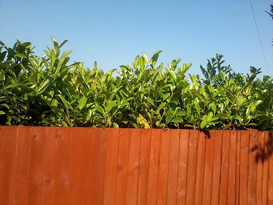 wood hedge