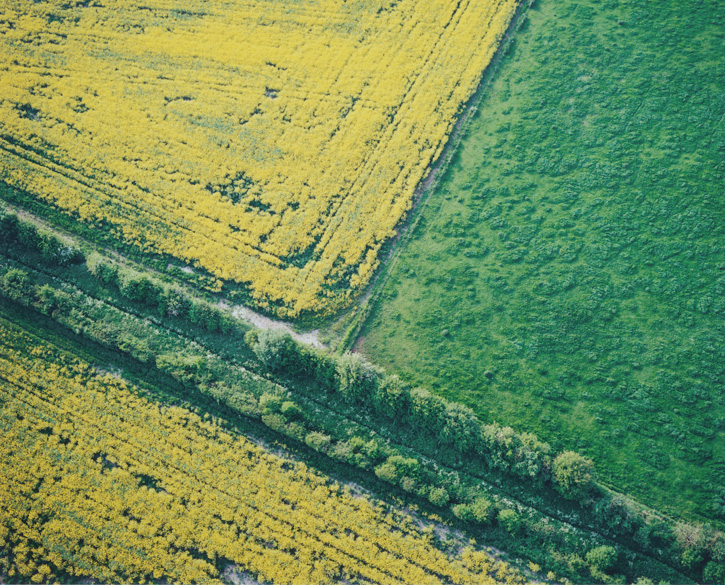 A pattern of fields in contrasting colours.
