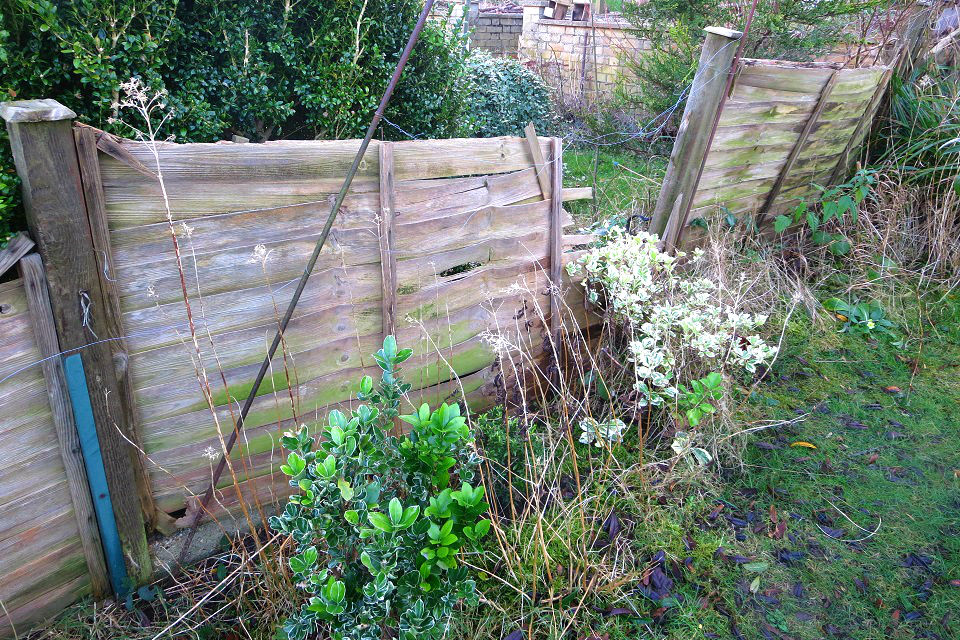 Damaged fence in a back garden, with a panel missing and the gap overgrown by plants.