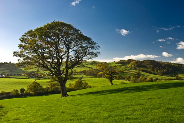 Trees in rolling countryside